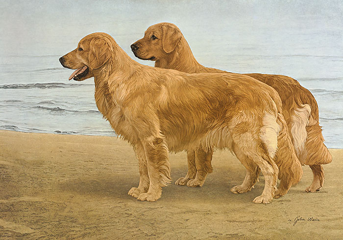 John Weiss - GOLDENS AT THE SHORE -  LIMITED EDITION PRINT Published by the Greenwich Workshop