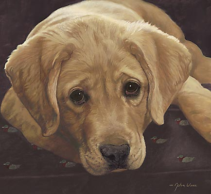 John Weiss - BEST LOVED BREEDS: YELLOW LABRADOR RETRIEVER -  L.E.PRINT Published by the Greenwich Workshop
