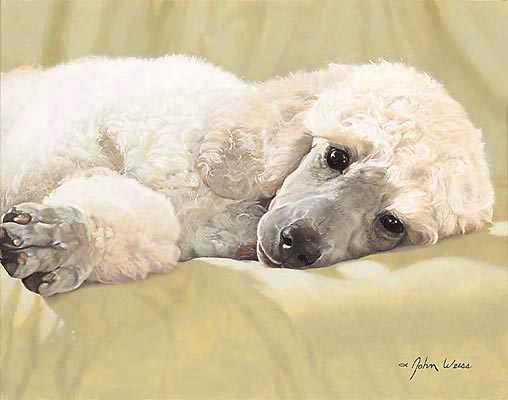 John Weiss - BEST LOVED BREEDS: WHITE STANDARD POODLE -  L. E. PRINT Published by the Greenwich Workshop
