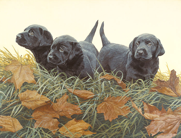 John Weiss - Lab Puppies -  ANNIVERSARY EDITION CANVAS Published by the Greenwich Workshop