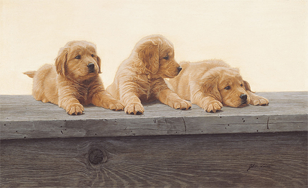 John Weiss - Golden Retriever Puppies -  ANNIVERSARY EDITION CANVAS Published by the Greenwich Workshop
