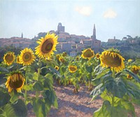 Sunflowers of Castiglion Fiorentino<br> LIMITED EDITION CANVAS