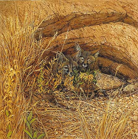 Bev Doolittle - FOX HAVEN -  OPEN EDITION PRINT Published by the Greenwich Workshop