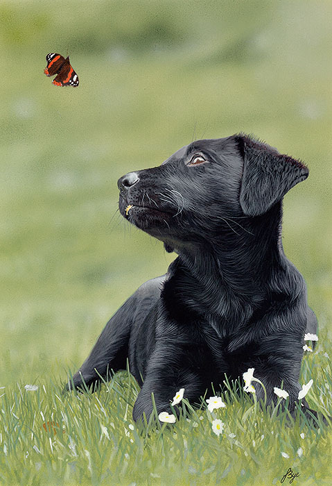 """Bella and the Butterfly"" by John Bye"