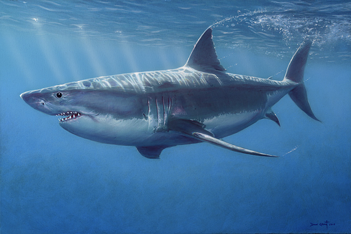 David Grant - Great White Shark -  OPEN EDITION CANVAS Published by the Greenwich Workshop