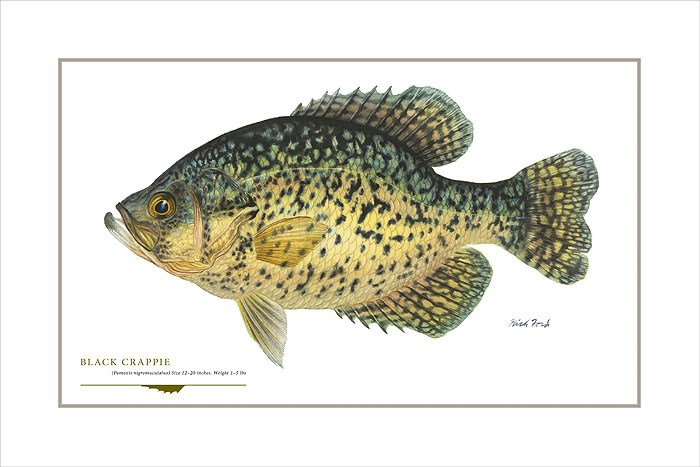 Flick Ford - Black Crappie -  OPEN EDITION PRINT Published by the Greenwich Workshop