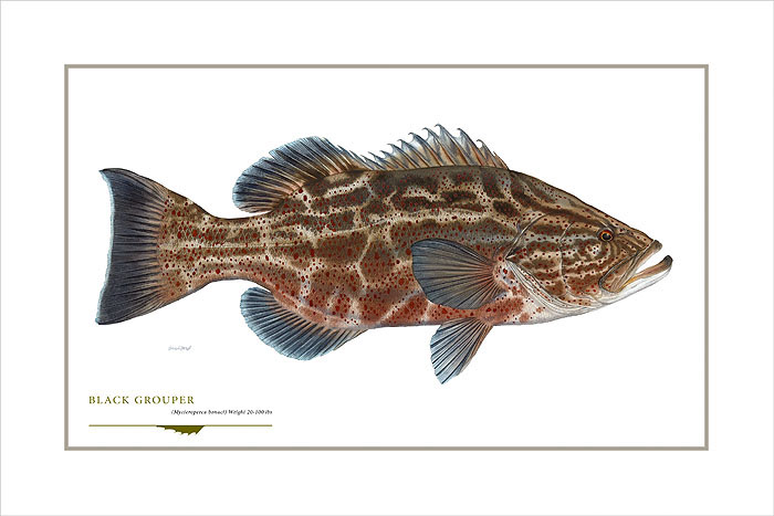 Flick Ford - Black Grouper -  OPEN EDITION PRINT Published by the Greenwich Workshop