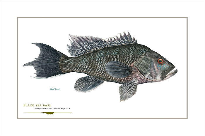 Flick Ford - Black Sea Bass -  OPEN EDITION PRINT Published by the Greenwich Workshop