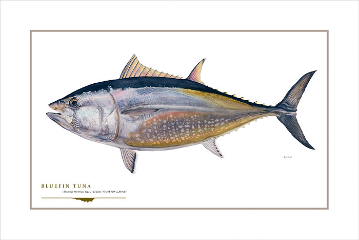 Flick Ford - Bluefin Tuna -  OPEN EDITION PRINT Published by the Greenwich Workshop