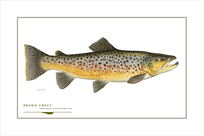Flick Ford - Brown Trout -  OPEN EDITION PRINT Published by the Greenwich Workshop