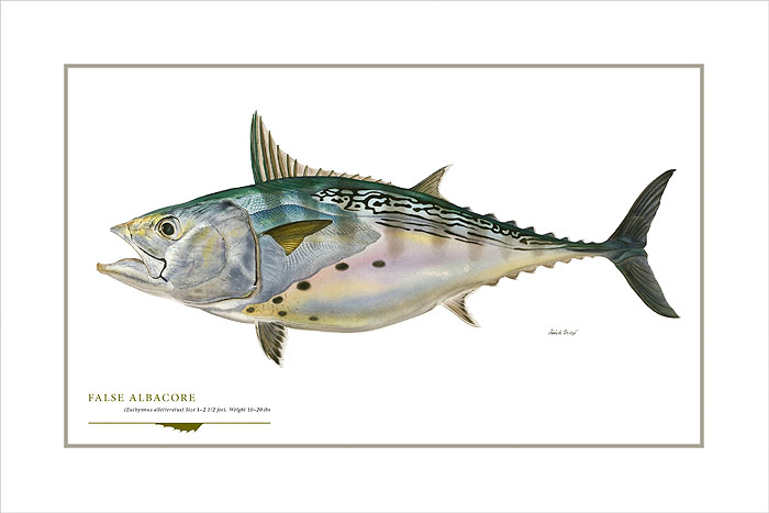 Flick Ford - False Albacore -  OPEN EDITION PRINT Published by the Greenwich Workshop