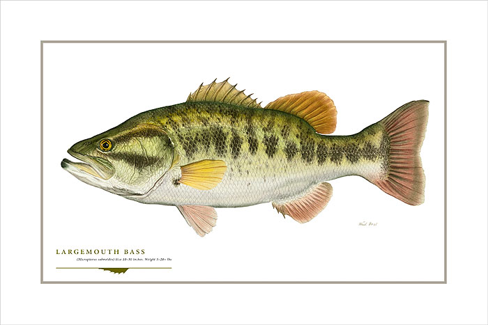 Flick Ford - Largemouth Bass -  OPEN EDITION PRINT Published by the Greenwich Workshop