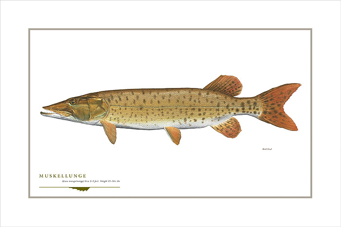 Flick Ford - Muskellunge -  OPEN EDITION PRINT Published by the Greenwich Workshop