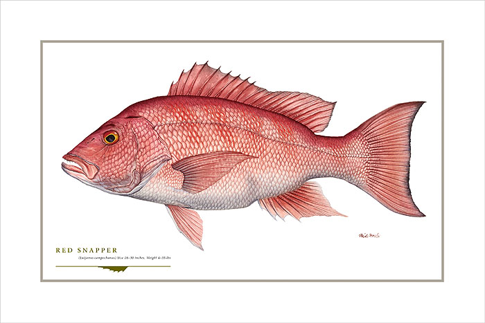 Flick Ford - Red Snapper -  OPEN EDITION PRINT Published by the Greenwich Workshop