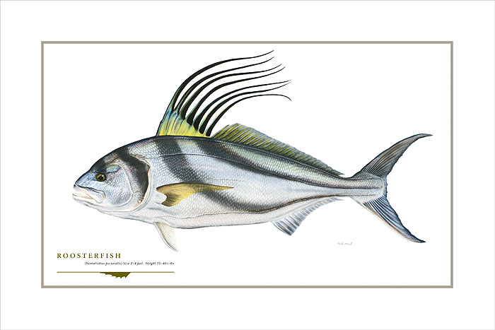 Flick Ford - Roosterfish -  OPEN EDITION PRINT Published by the Greenwich Workshop
