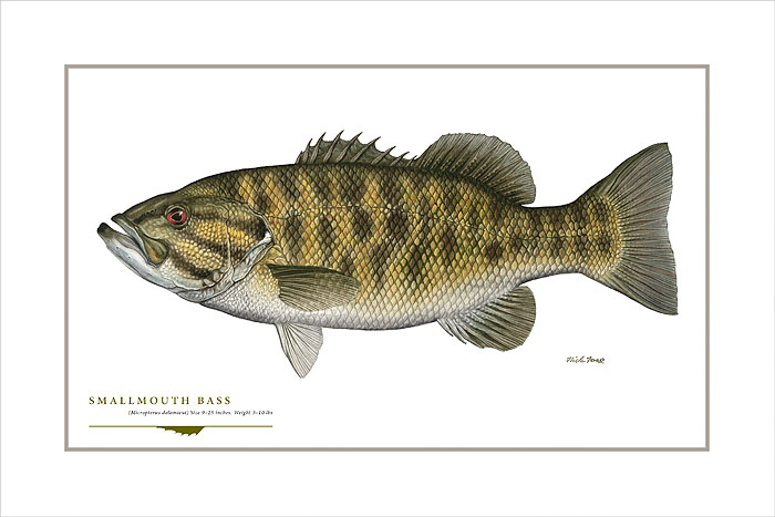 Flick Ford - Smallmouth Bass -  OPEN EDITION PRINT Published by the Greenwich Workshop