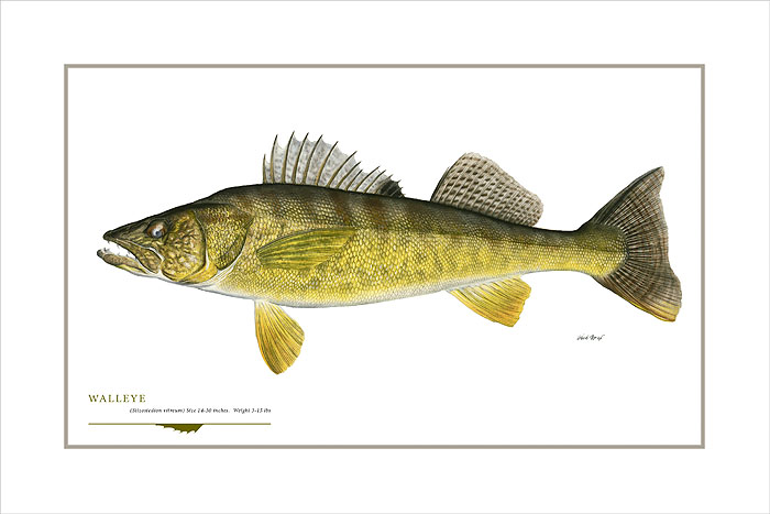 Flick Ford - Walleye -  OPEN EDITION PRINT Published by the Greenwich Workshop