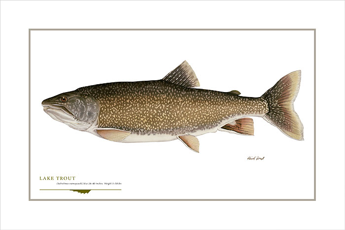 Flick Ford - Lake Trout -  OPEN EDITION PRINT Published by the Greenwich Workshop