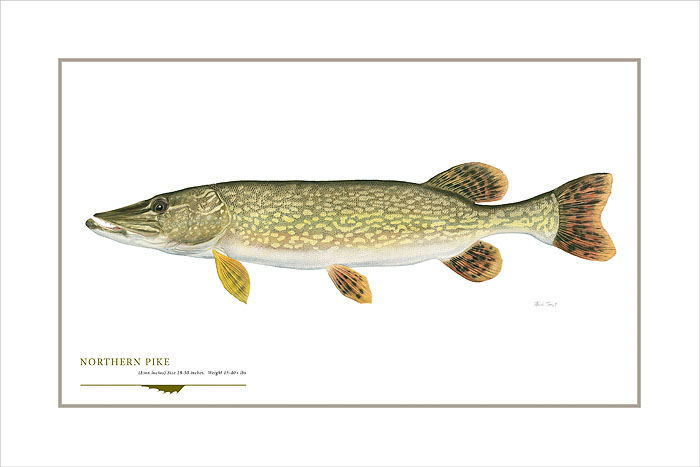 Flick Ford - Northern Pike -  OPEN EDITION PRINT Published by the Greenwich Workshop