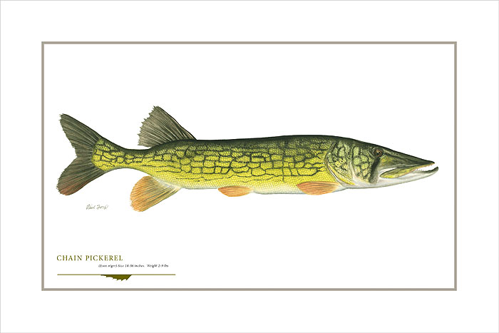 Flick Ford - Chain Pickerel -  OPEN EDITION PRINT Published by the Greenwich Workshop