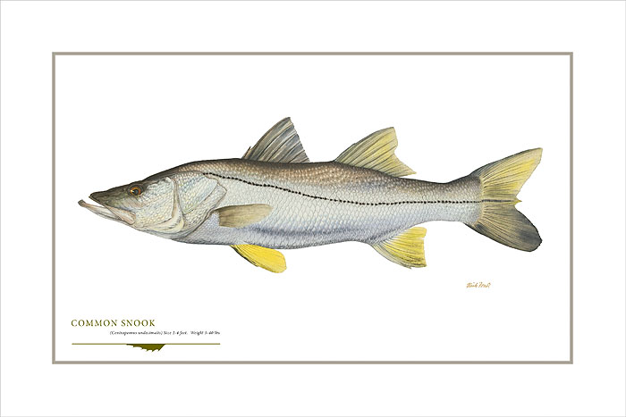 Flick Ford - Common Snook -  OPEN EDITION PRINT Published by the Greenwich Workshop