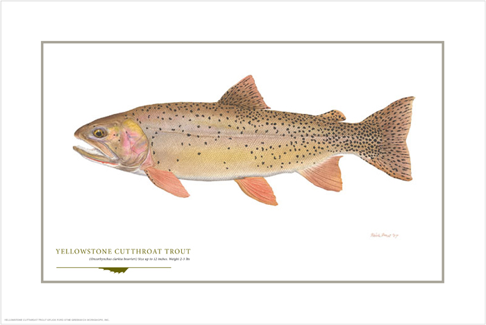 Flick Ford - Yellowstone Cutthroat -  OPEN EDITION PRINT Published by the Greenwich Workshop