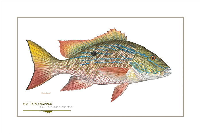 Flick Ford - Mutton Snapper -  OPEN EDITION PRINT Published by the Greenwich Workshop
