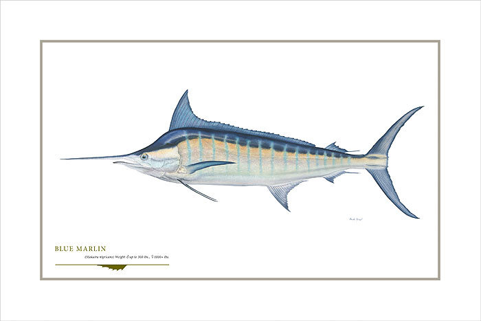 Flick Ford - Blue Marlin -  OPEN EDITION PRINT Published by the Greenwich Workshop