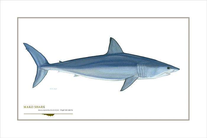Flick Ford - Shortfin Mako Shark -  OPEN EDITION PRINT Published by the Greenwich Workshop