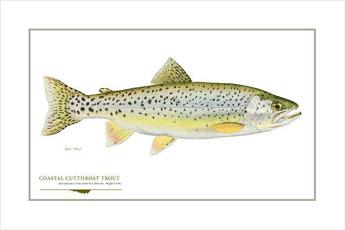 Flick Ford - Coastal Cutthroat Trout -  OPEN EDITION PRINT Published by the Greenwich Workshop