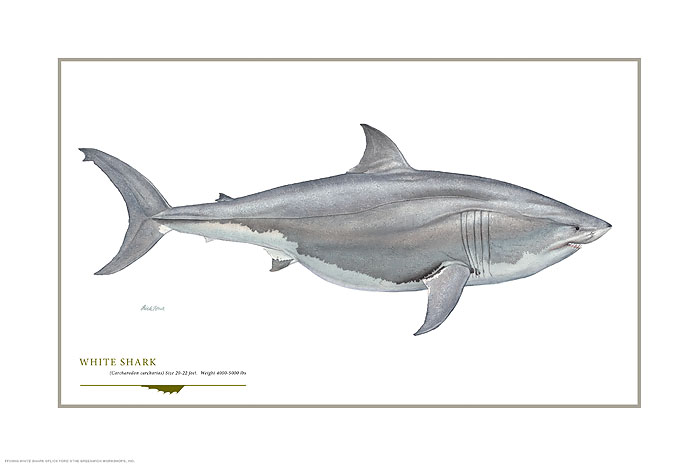 Flick Ford - Great White -  OPEN EDITION PRINT Published by the Greenwich Workshop