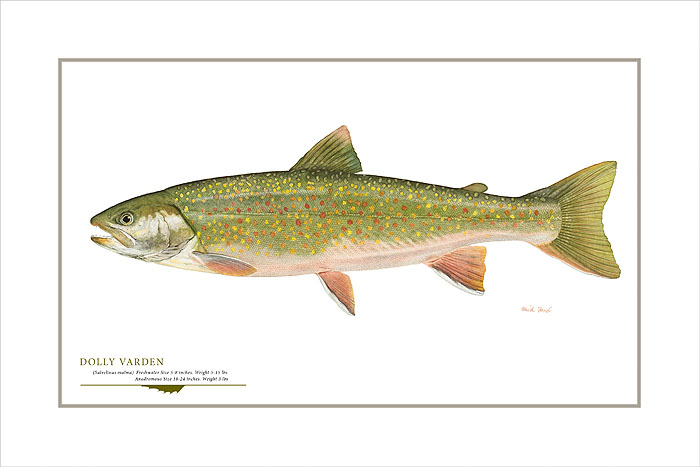Flick Ford - Dolly Varden Trout -  OPEN EDITION PRINT Published by the Greenwich Workshop
