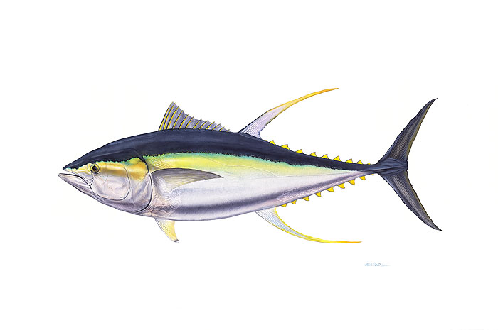 Flick Ford - Yellowfin Tuna -  OPEN EDITION PRINT Published by the Greenwich Workshop