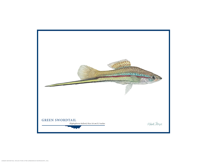 Flick Ford - Green Swordtail -  OPEN EDITION PRINT Published by the Greenwich Workshop