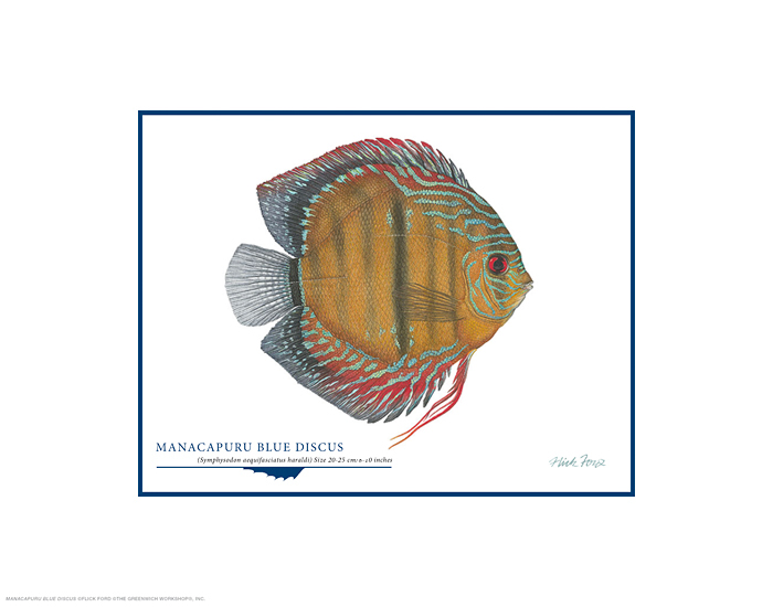 Flick Ford - Manacapuru Blue Discus -  OPEN EDITION PRINT Published by the Greenwich Workshop