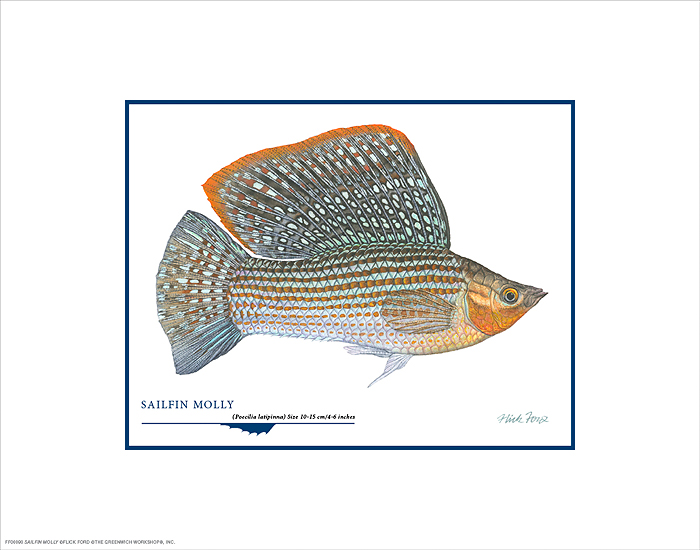 Flick Ford - Sailfin Molly -  OPEN EDITION PRINT Published by the Greenwich Workshop