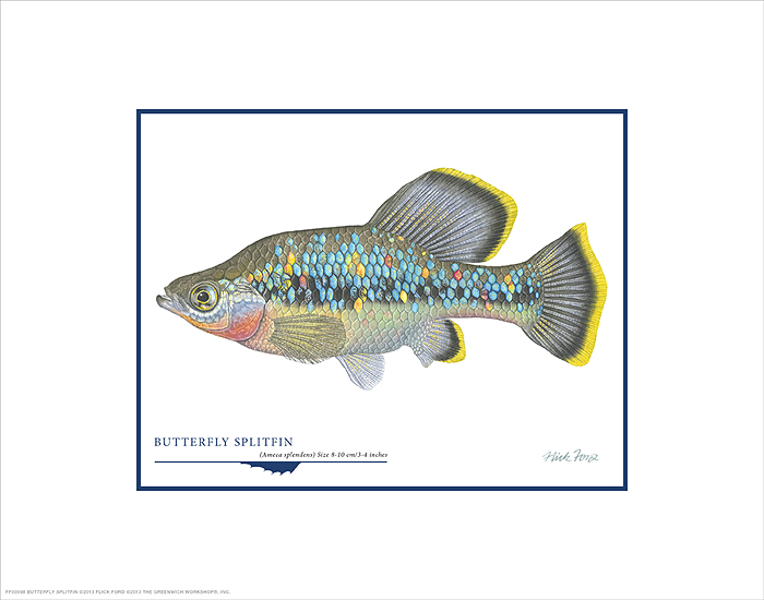 Flick Ford - Butterfly Splitfin -  OPEN EDITION PRINT Published by the Greenwich Workshop