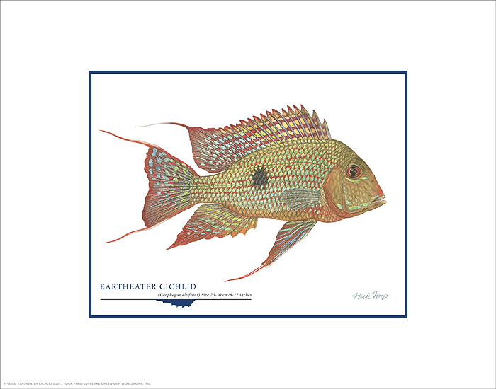 Flick Ford - Eartheater Cichlid -  OPEN EDITION PRINT Published by the Greenwich Workshop