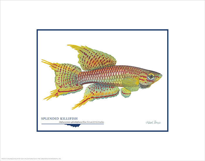 Flick Ford - Splendid Killifish -  OPEN EDITION PRINT Published by the Greenwich Workshop