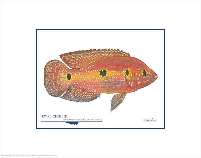 Flick Ford - Jewel Cichlid -  OPEN EDITION PRINT Published by the Greenwich Workshop