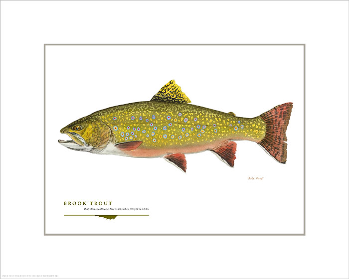 Flick Ford - Brook Trout -  OPEN EDITION PRINT Published by the Greenwich Workshop