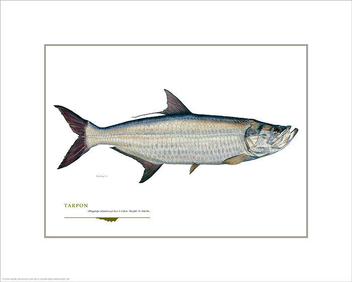 Flick Ford - Tarpon -  OPEN EDITION PRINT Published by the Greenwich Workshop