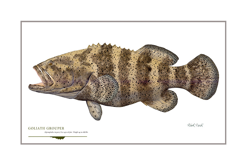 Flick Ford - Goliath Grouper (18) -  OPEN EDITION PRINT Published by the Greenwich Workshop