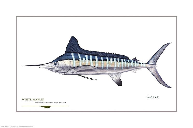 Flick Ford - White Marlin (18) -  OPEN EDITION PRINT Published by the Greenwich Workshop
