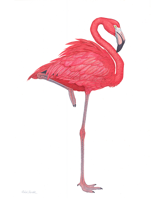 Flick Ford - Flamingo (8) -  OPEN EDITION PRINT Published by the Greenwich Workshop