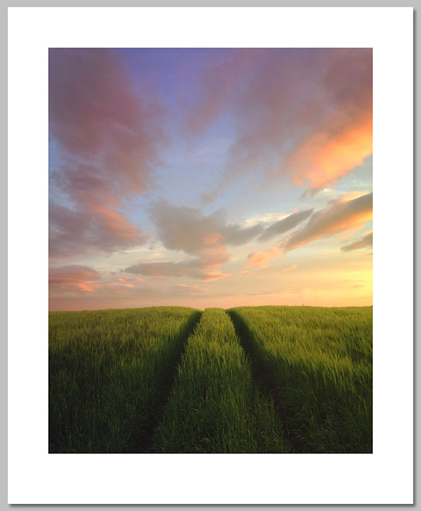 Andrew Edward Fagan - Summer Fields -  OPEN EDITION PRINT Published by the Greenwich Workshop