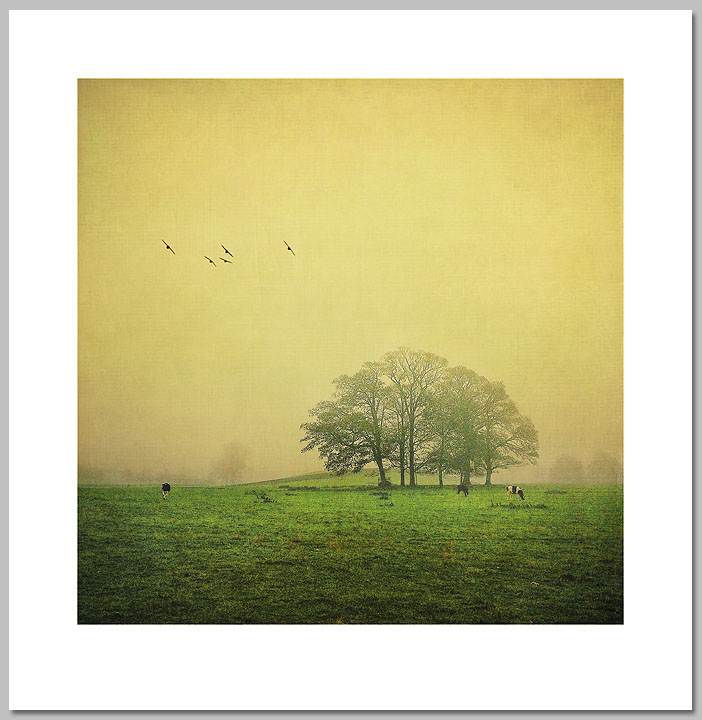 Elaine Taylor - Yorkshire Field -  OPEN EDITION PRINT Published by the Greenwich Workshop